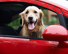 Dog looking out the passenger window of a red car.